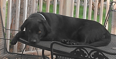 Beau on deck table May 2015